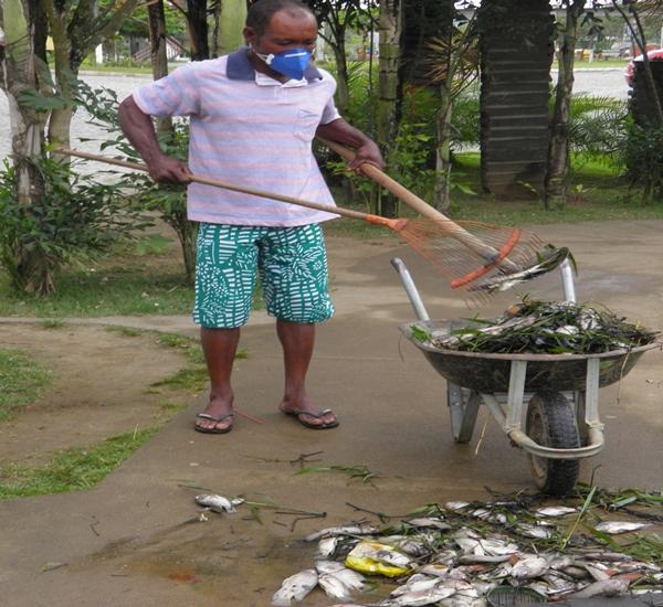 Os funcionários do Meio ambiente eram obrigados a usar máscaras para retirar os peixes