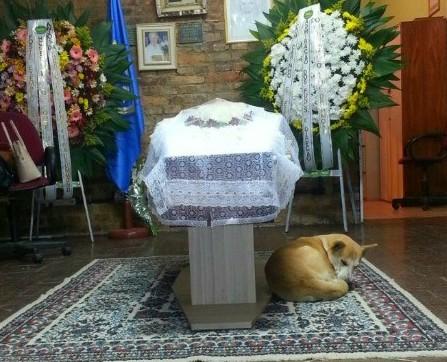 Animal adotado pela idosa ficou todo o tempo recolhido e abatido, ao lado do caixão