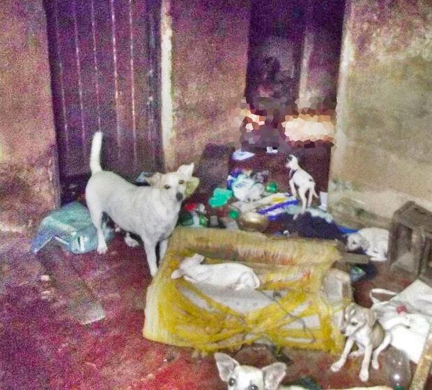 Segundo a polícia, alguns cachorros foram encontrados sujos de sangue (Fotos: Vermelhinho BA)