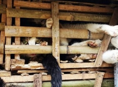 Os gatos seriam consumidos em restaurantes do Vietinã