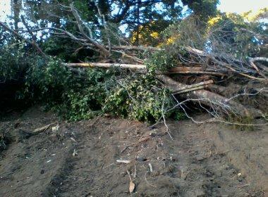 Diversas árvores estão sendo derrubadas (Foto leitor BN