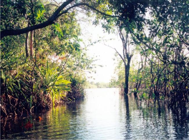 Os igarapés mostram a grandiosidade de lugar rico em peixe e custáceos