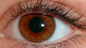 As córneas foram transportadas para o Banco de Olhos, que funciona na Secretaria de Saúde da Bahia (Sesab), em Salvador.