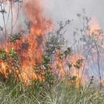 MARAÚ: INCÊNDIO  DESTRÓI  RESTINGA DE MATA ATLÂNTICA NA REGIÃO DE PIRACANGA; VEJAS AS  FOTOS