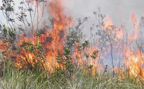 As chamas atingiram  mais de 5 metros de altura
