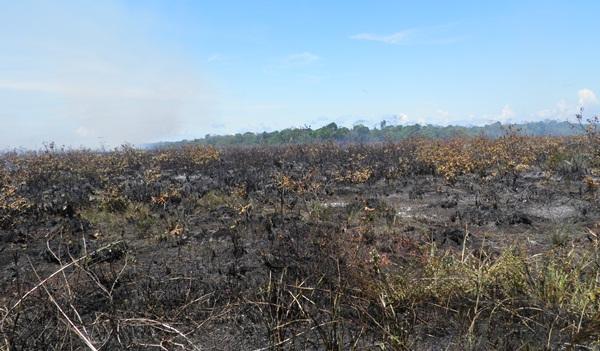 Uma área estimada em 100 hectares foi destruída pelo fogo
