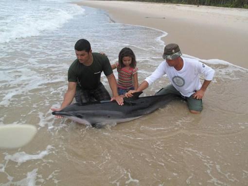 """Biólogos, veterinários, moradores e visitantes de Piracanga e Praia do Patizeiro se mobilizaram para salvar o golfinho. Apesar da morte do animal, o clima de solidariedade e de esforço serviu para demonstrar que muitas pessoas respeitam o """"direito à vida"""" e preservação dos outros seres vivos."""