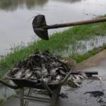UBAITABA: LAGO FERNANDO LONA  ESTÁ MORRENDO