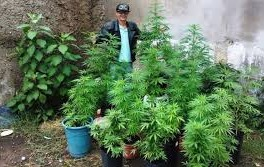 Sérgio Delvair Costa, de 52 anos, foi preso por tráfico e acusado de montar uma cooperativa que reunia 1.200 plantadores de maconha no Brasil.