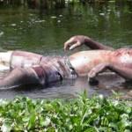 UBAITABA : HOMEM QUE MORREU AFOGADO FOI ENCONTRADO BOIANDO NO RIO DAS CONTAS