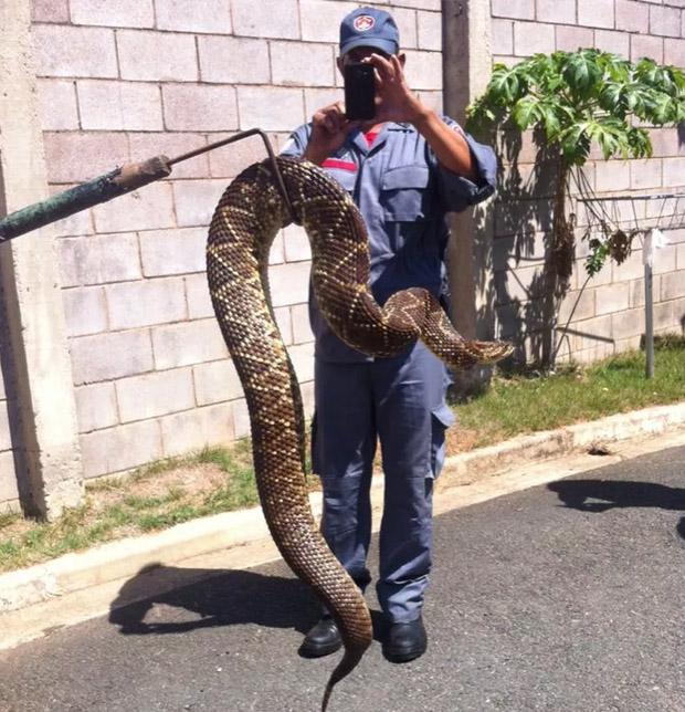 Condôminos registraram captura de cobras e pediram ajuda à prefeitura local (Foto: Reprodução)