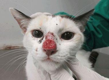As lesões em humanos e cães geralmente não são tão severas como nos felinos