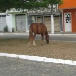 UBAITABA: ANIMAIS CONTINUAM PASTANDO  NA AVENIDA BEIRA RIO