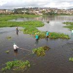 UBAITABA: PREFEITURA PROMOVE RETIRADA DE BARONESAS  DO LEITO DO RIO