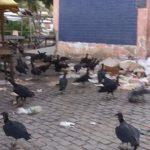 UBAITABA: LIXO ACUMULADO ATRAI ANIMAIS PERIGOSO E DISSEMINA DOENÇAS