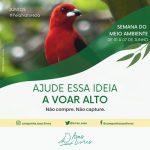 SEMANA DO MEIO AMBIENTE: O TRÁFICO DE ANIMAIS SILVESTRES AMEAÇA A BIODIVERSIDADE DO PLANETA