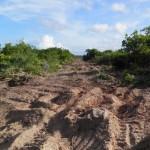ITACARÉ : ESPECULAÇÃO IMOBILIÁRIA ABRE ESTRADA ENTRE A PRAIA E RESTINGA NA FAZENDA PONTAL