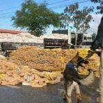 FEIRA: CAMINHONEIRO É PRESO COM MAIS DE 03 TONELADAS DE MACONHA ESCONDIDA EM CARGA