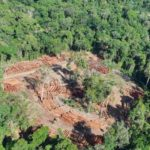 AMAZÔNIA TEM ÁREA  DE MADEIRA EXPLORADA DO TAMANHO DE TRÊS CIDADES DE S. PAULO
